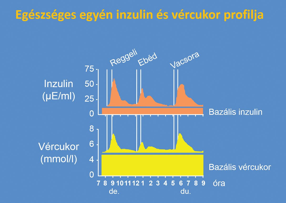Egészséges egyén inzulin- és vércukor-profilja