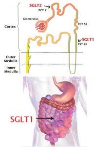 SGLT-2 gátlószerek