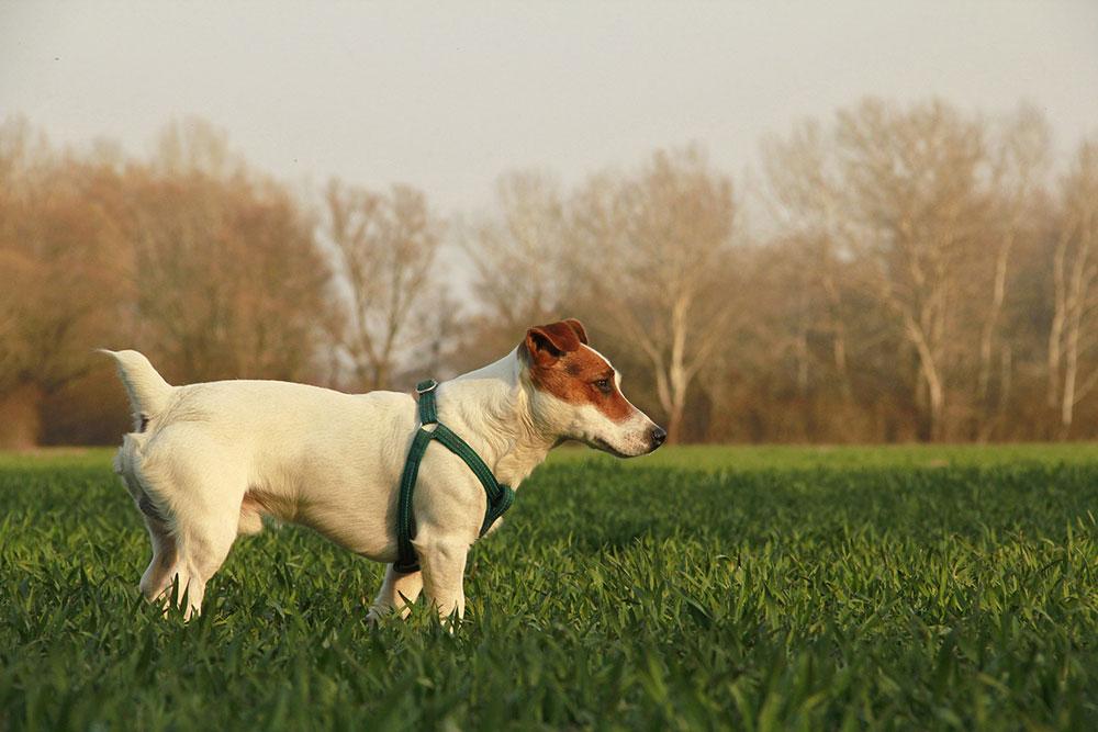 lefogy a kutyák napi 1 órás sétar