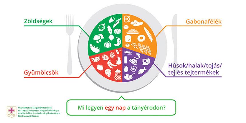 Dietetikusok az elhízás kérdéséről - szervezetünk energiaigénye