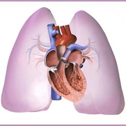 koronavírus és szívbetegség
